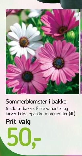 Sommerblomster i bakke