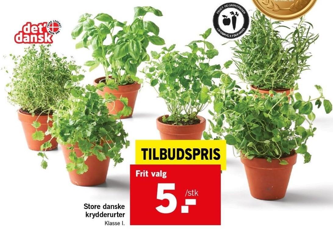 Store danske krydderurter