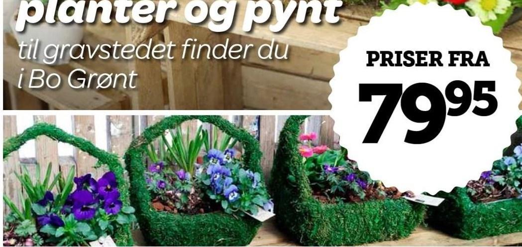 Planter og pynt