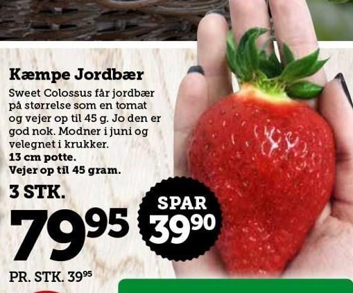 Kæmpe Jordbær 3 stk.
